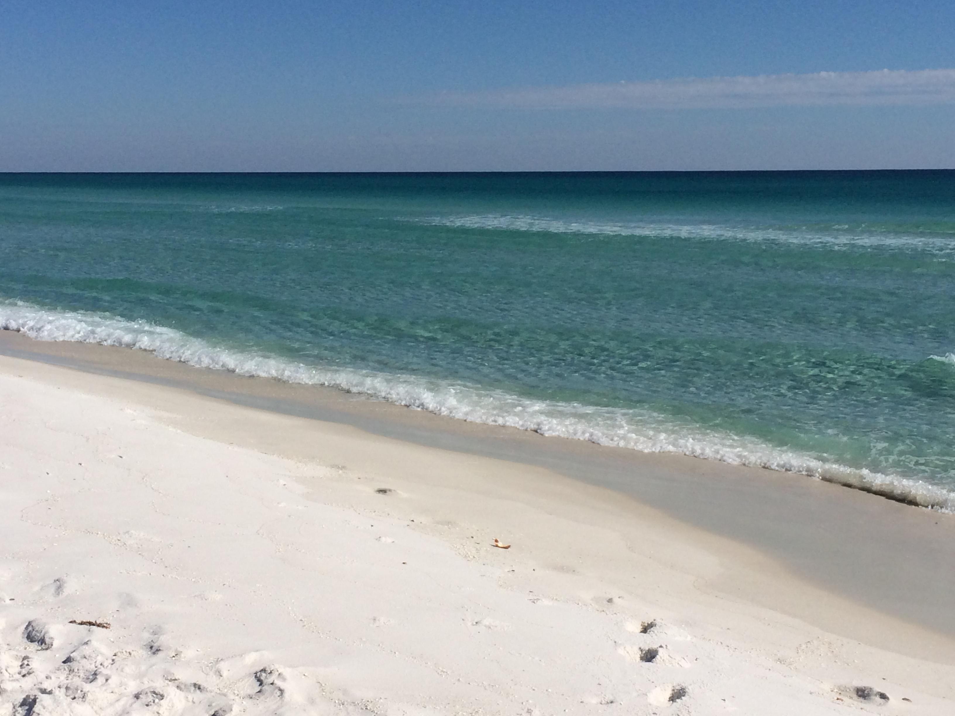 Dog Friendly Beaches Near Pensacola Florida